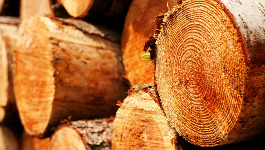 Wood / Biomass